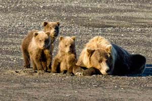 Bear-Viewing-Tours-in-Homer-Alaska