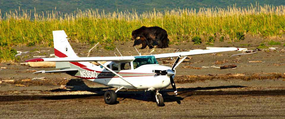 Bear Viewing With Alaska Bear Adventures