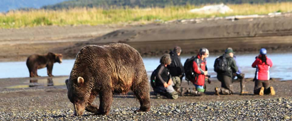 Best Bear Watching Tours in Katmai National Park