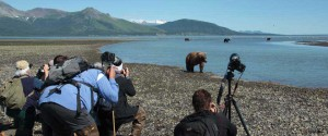 See Brown Bears Up Close on Alaska Bear Adventures